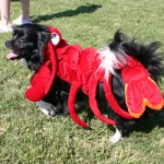 Dog in Lobster Custome